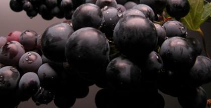 wine-03-645x280