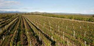 Organska vina iz kamena – VINARIJA JOKIĆ, DALMACIJA