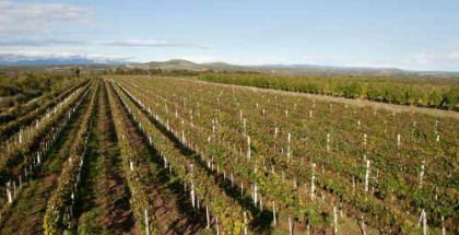 Profil vinarije-enciklopedija-1