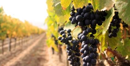 vinski-turizam